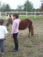 equitazione educativa codroipo 07 150x200 Equitazione Educativa in fattoria a Codroipo