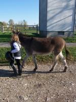 equitazione educativa codroipo 08 150x200 Equitazione Educativa in fattoria a Codroipo