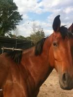 equitazione educativa udine 1 150x200 Equitazione Educativa in fattoria a Codroipo